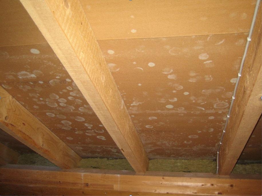 Bauschaden: Schimmel im Installationsschacht wegen fehlender Abklebung